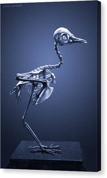 Featherless In Blue Canvas Print