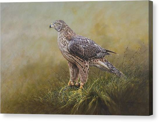 Canvas Print featuring the painting Female Goshawk Paintings by Alan M Hunt