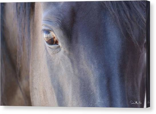 Fenced Foal Canvas Print