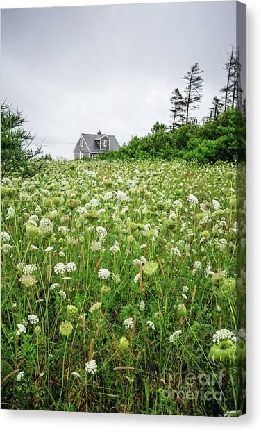 Prince Edward Island Canvas Print - Field Of Queen Anne's Lace by Edward Fielding