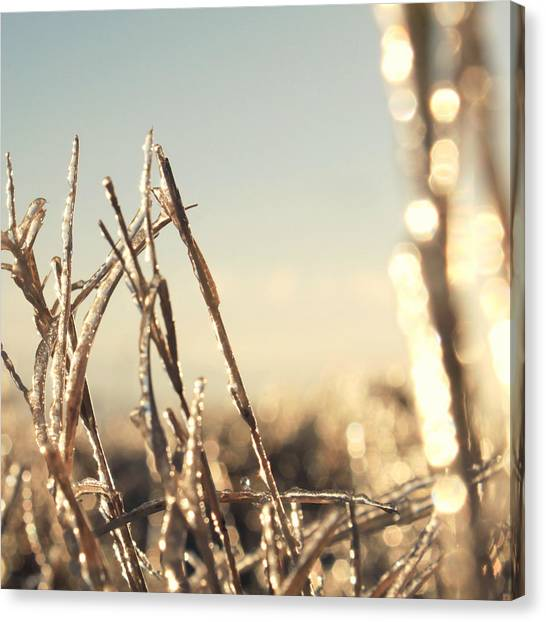 Blade Of Grass Canvas Print - Fields Of Gold . . Getty by Suze