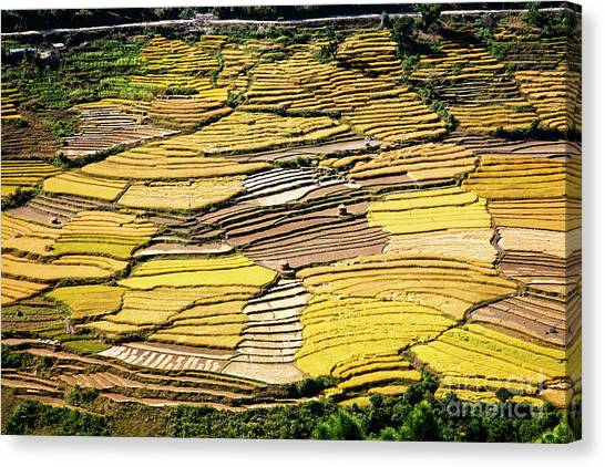 Canvas Print featuring the photograph Fields Of Rice by Scott Kemper