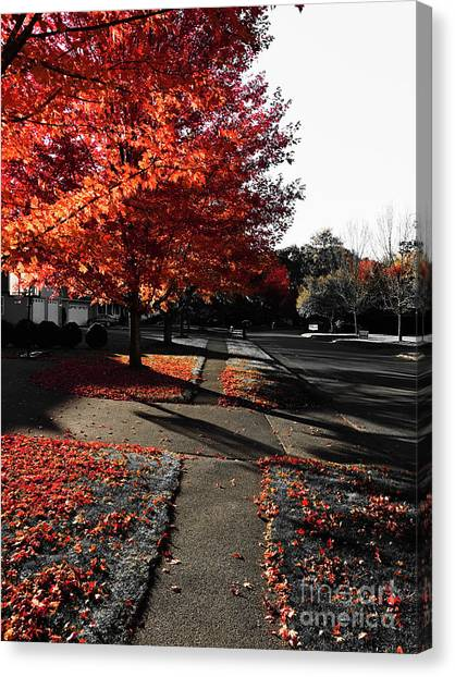 Fiery Fall Trees, Part 2 Canvas Print by JMerrickMedia