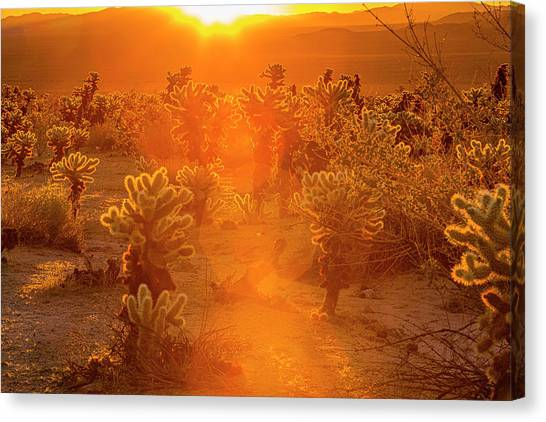 Fiery Sunrise Among The Cacti Canvas Print