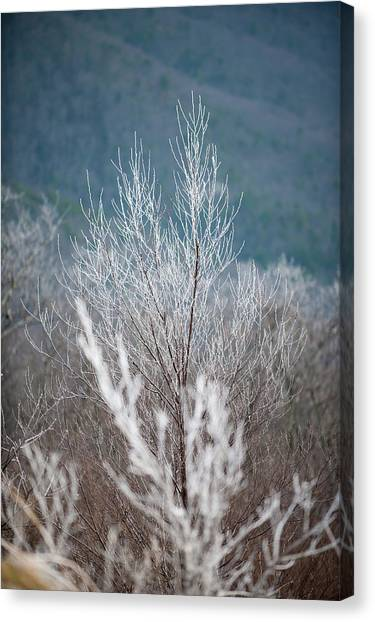 Fingers Of Hoarfrost Canvas Print