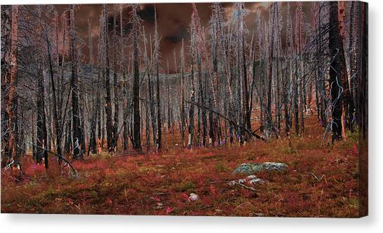 Fire Trees Canvas Print
