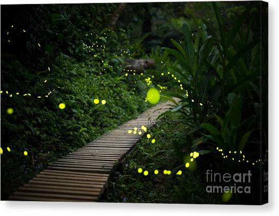 Bush Canvas Print - Fireflies In The Bush At Night In Taiwan by Richie Chan