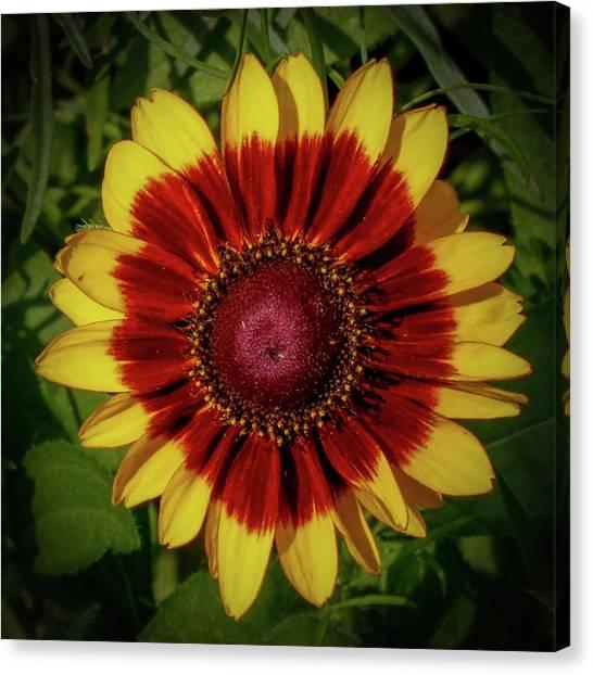Firewheel Canvas Print