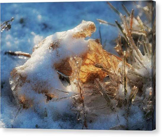 Canvas Print featuring the photograph First Snow, Leaves And Light by Tatiana Travelways