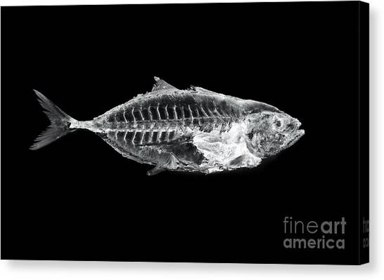 Medical Canvas Print - Fish X Ray by Antpkr