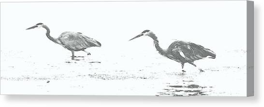 Fishing Blue Herons Canvas Print