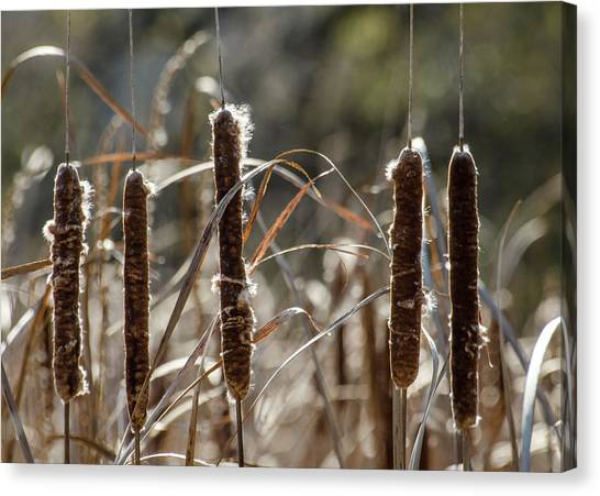 Canvas Print featuring the photograph Five Cattails by Rob Huntley
