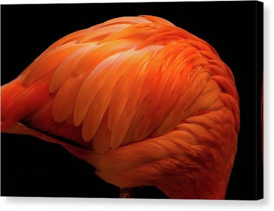 Flamingo Vermilion Canvas Print by Akihiro Takemasa