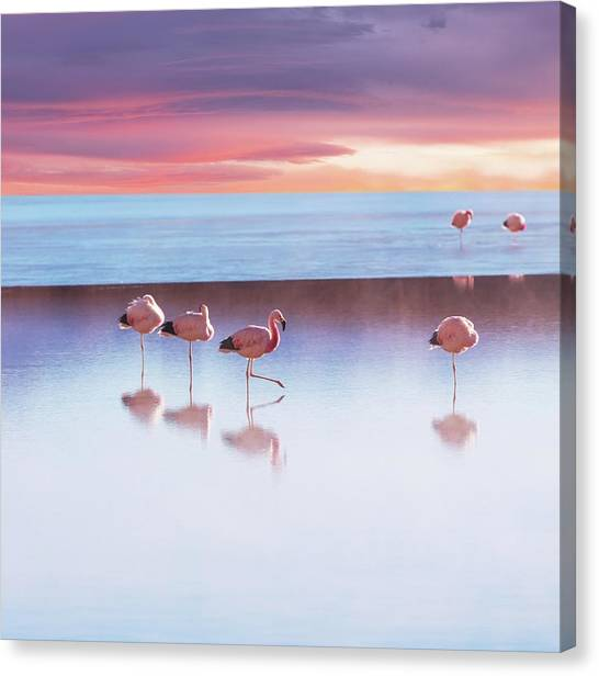Flamingoes In Bolivia Canvas Print by Ingram Publishing