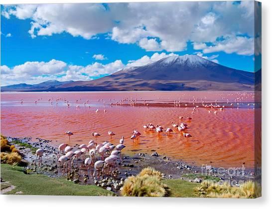 Stunning Canvas Print - Flamingos In Laguna Colorada , Uyuni by Byelikova Oksana