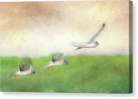 Flight Of The Harrier Canvas Print by Tracy Munson