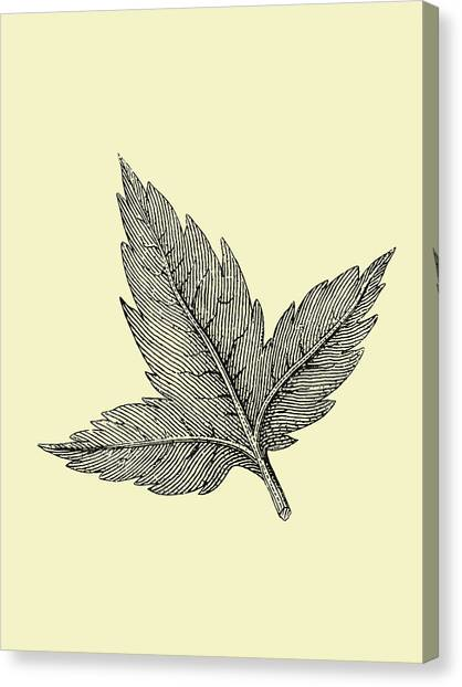Dahlias Canvas Print - Floating Leaf by Naxart Studio