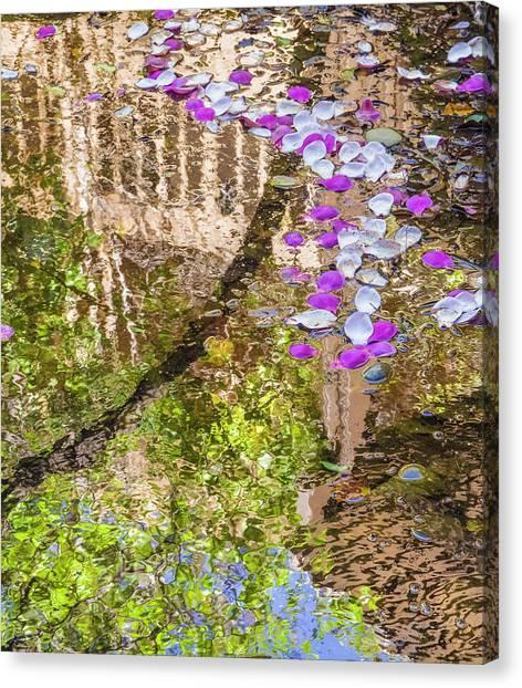 Floating Magnolia Petals Canvas Print