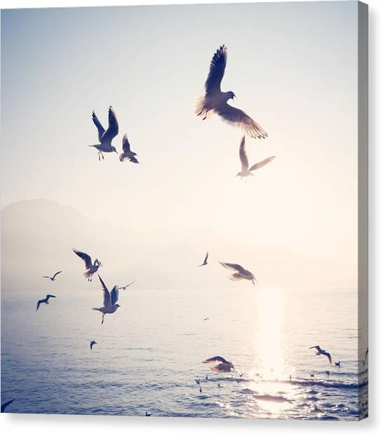 Flock Of Birds Flying Over Sea On Sunny Canvas Print by Toni Barth / Eyeem