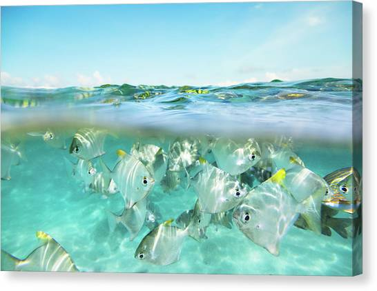 Flock Of Fish Under And Above Water Canvas Print by Danilovi