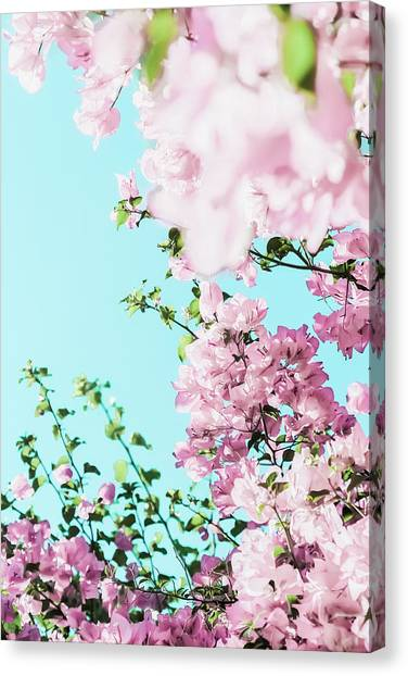 Floral Dreams I Canvas Print
