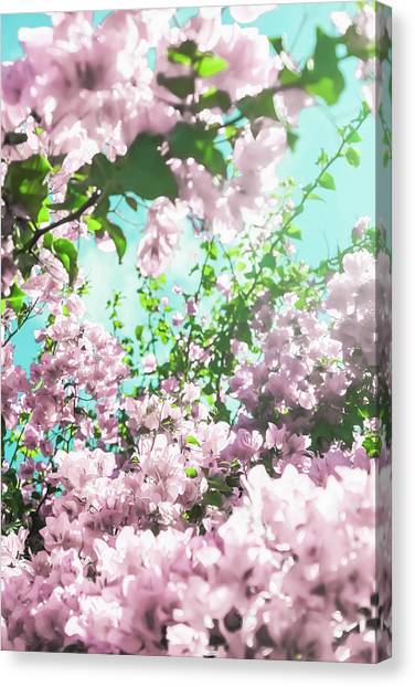 Floral Dreams Iv Canvas Print