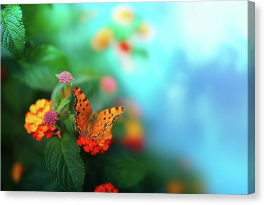 Flower Background With Butterfly Canvas Print by O-che