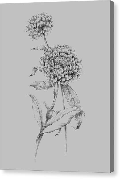 Dahlias Canvas Print - Flower Drawing 3 by Naxart Studio
