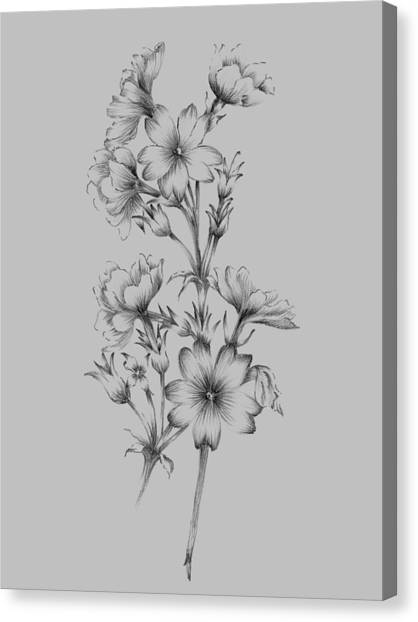 Dahlias Canvas Print - Flower Drawing II by Naxart Studio