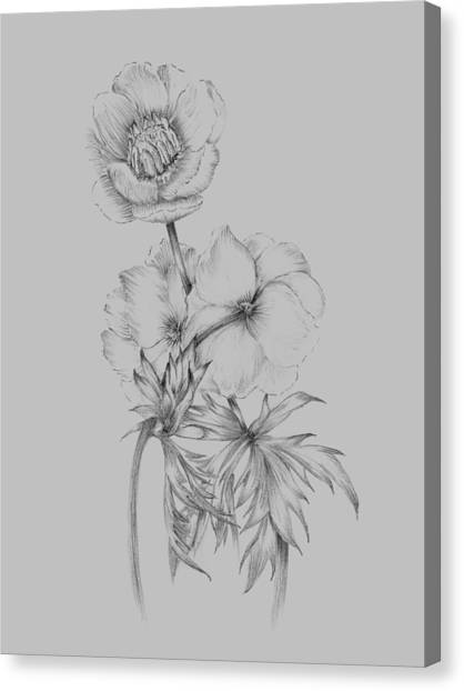 Dahlias Canvas Print - Flower Illustration II by Naxart Studio