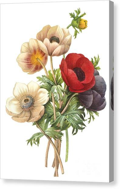 Botany Canvas Print - Flower Illustration by The Palms