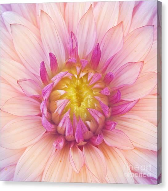 Dahlias Canvas Print - Flower Macro by Danielo