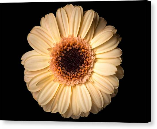 Canvas Print featuring the photograph Flower Over Black by Mirko Chessari