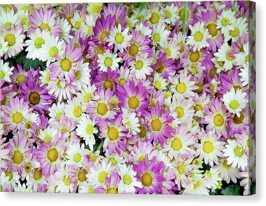 In Bloom Canvas Print - Flower Patterns Collection Set 10 by Az Jackson