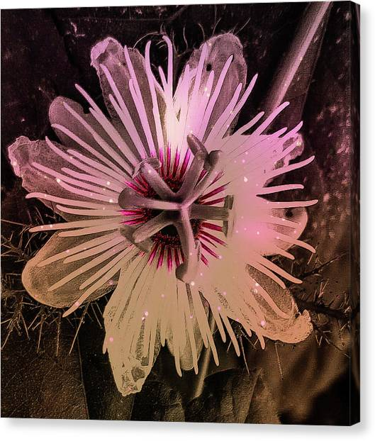 Flower With Tentacles Canvas Print