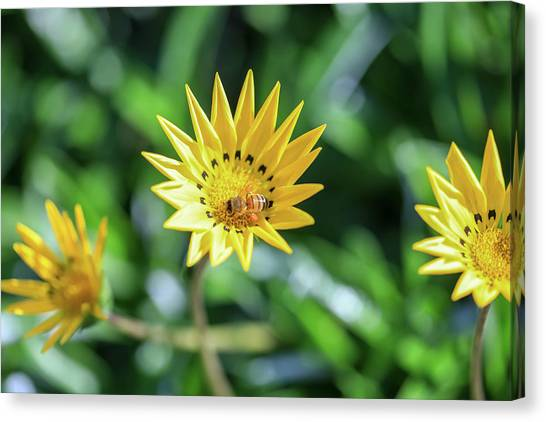 Yellow Flowers And A Bee Canvas Print