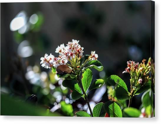 Beautiful Blooms Canvas Print