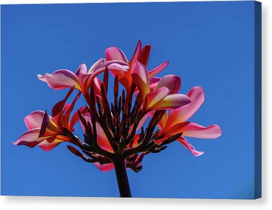 Flowers In Clear Blue Sky Canvas Print