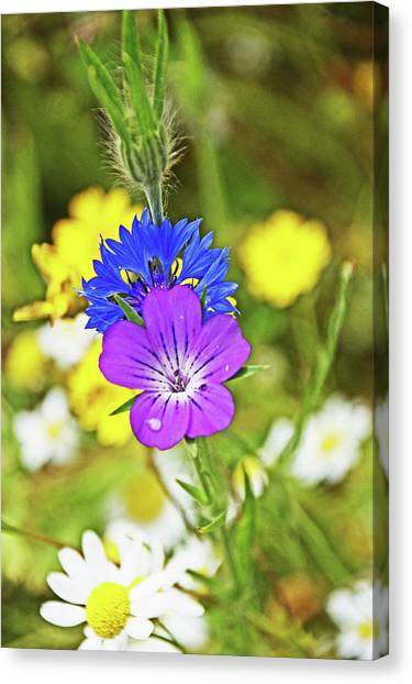 Flowers In The Meadow. Canvas Print