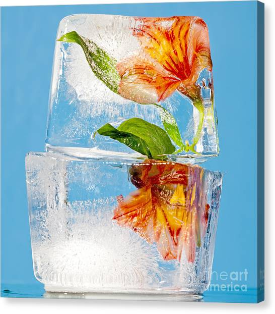 Nature Still Life Canvas Print - Flowers Trapped In A Block Of Ice by Tim Masters
