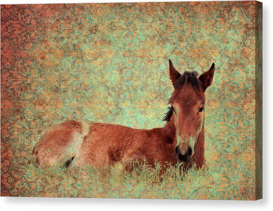 Flowery Foal Canvas Print
