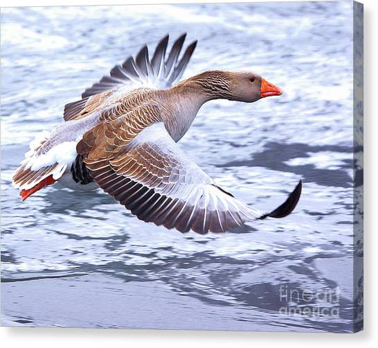 Fly-by Canvas Print