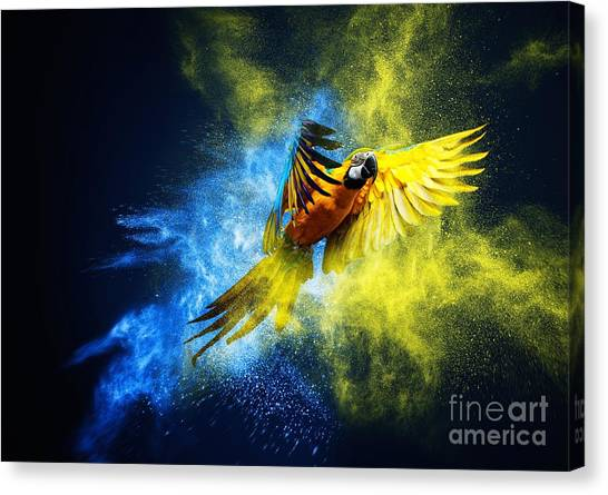 Macaw Canvas Print - Flying Ara Parrot Over Colourful Powder by Nejron Photo