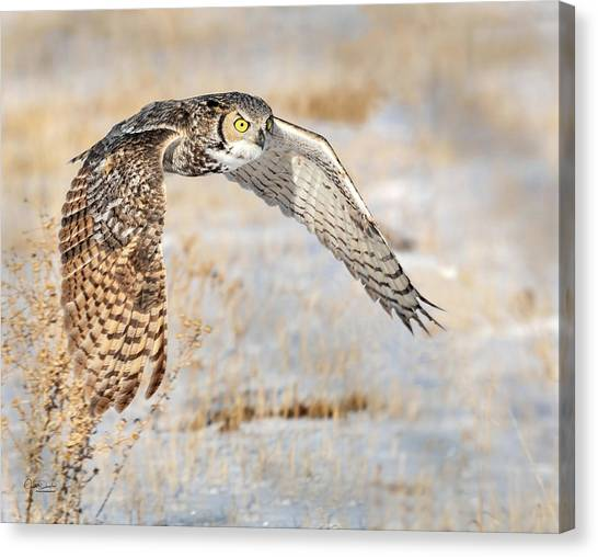 Flying Great Horned Owl Canvas Print