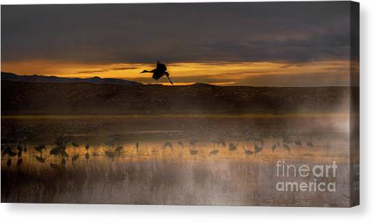 Flying Over Crane Pond Canvas Print