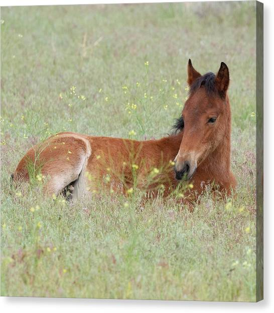 Foal In The Flowers Canvas Print