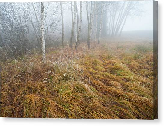 Foggy Moor Landscape With Birch Trees Canvas Print