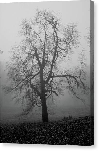 Canvas Print featuring the photograph Foggy Tree In Black And White by William Selander