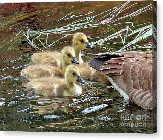 Following Mom's Lead Canvas Print