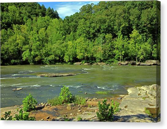 Canvas Print featuring the photograph Forest At Cumberland River by Angela Murdock
